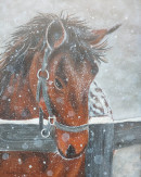 "16 - ""Horse in Snow"" by Beverly Cook - Acrylic - 12""x15 - $150 framed - contact beverlycookjp@gmail.com"