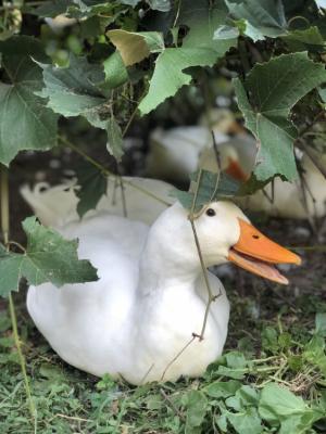 "96 - ""Sitting Duck"" by Yvonne Blacker - Photograph - 8""x10"" - NFS - contact yvonneblacker@gmail.com"