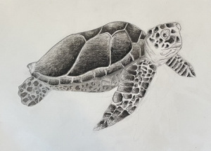 34A. Sea Turtle  by Ella  Deirmendjian