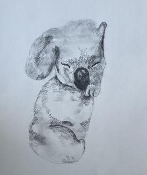 34B. Sleeping Koala  by Ella  Deirmendjian