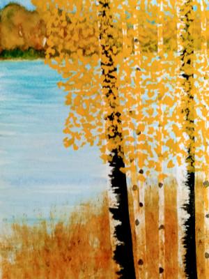 15B. Black Birch by Philip Hermann