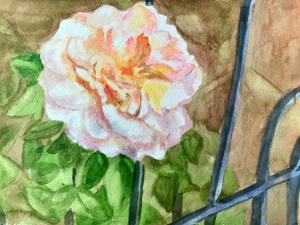 19A. Freiburg Flower by Ruth Clark