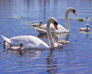 16B. Family Outing! by Shaila Desai